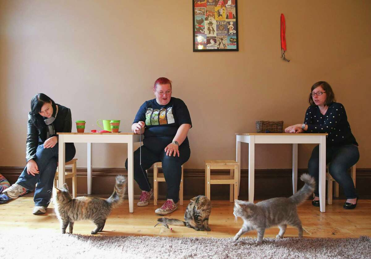 People get to come in and play with cats from rescue shelters while they drink a warm cup of java.