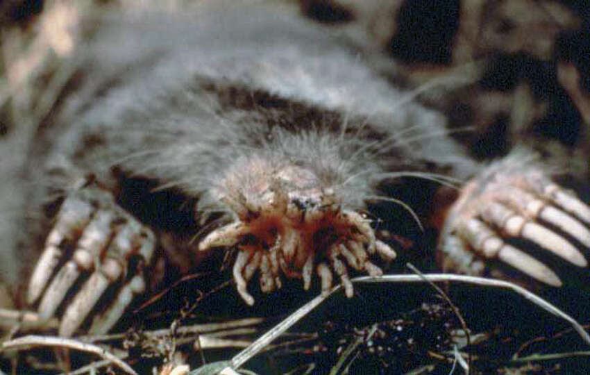 Connecticut: Star-Nosed MoleYes, this terrifying space creature actually exists in Connecticut. According to Reader's Digest, their nose