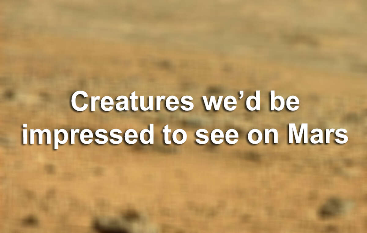 Some guy thinks he sees a regular ol' lizard on Mars and, well, seeing these creatures on Mars would impress us more. Click through to see our list of creatures we'd be impressed to see on the Red Planet.
