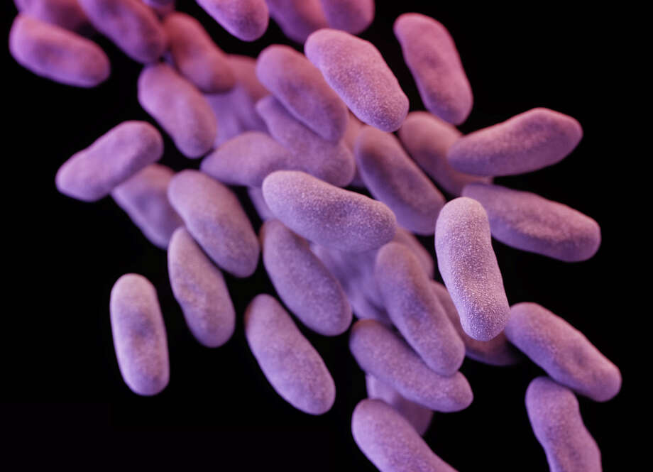 """This illustration depicts a 3-D computer-generated image of a group of """"superbug"""" bacteria. Photo: Melissa Brower / Associated Press / Centers for Disease Control"""
