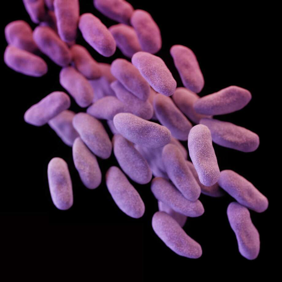 This illustration released by the Centers for Disease Control depicts a three-dimensional computer-generated image of a group of carbapenem-resistant Enterobacteriaceae bacteria. The artistic recreation was based upon scanning electron micrographic imagery. Photo: Melissa Brower, HOPD / Centers for Disease Control