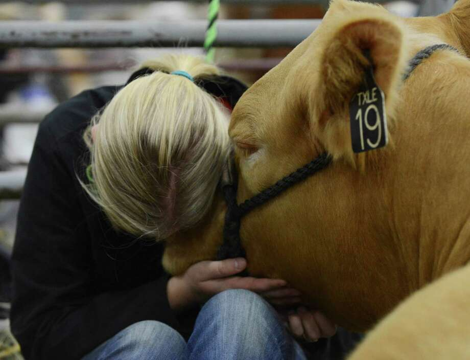 Gatlynn Johnson snuggles with her heifer on the grounds of the San Antonio Stock Show & Rodeo on Friday, Feb. 20, 2015. Gatlynn and her family traveled from Centerville, Texas, to show her heifer. Photo: Billy Calzada, San Antonio Express-News / San Antonio Express-News