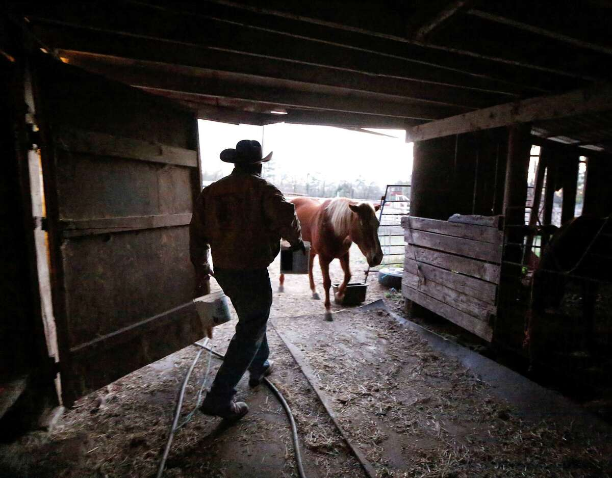 Northeast Trail Riders Association trail boss Anthony Bruno prepares for the Houston Livestock Show & Rodeo trail ride on Thursday. The group, which pays homage to Creole black cowboys, will end its 180-mile ride on Saturday in Houston to kick off the rodeo.