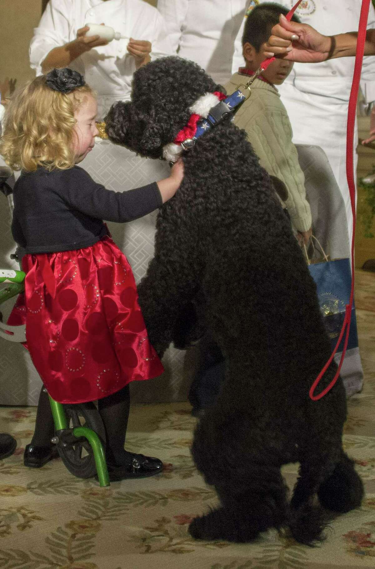 The Obama family dog Sunny jumps up on two-year-old Ashtyn Gardner right before she takes a tumble during the White House Christmas decorations viewing at the White House in Washington, DC, December 4, 2013.