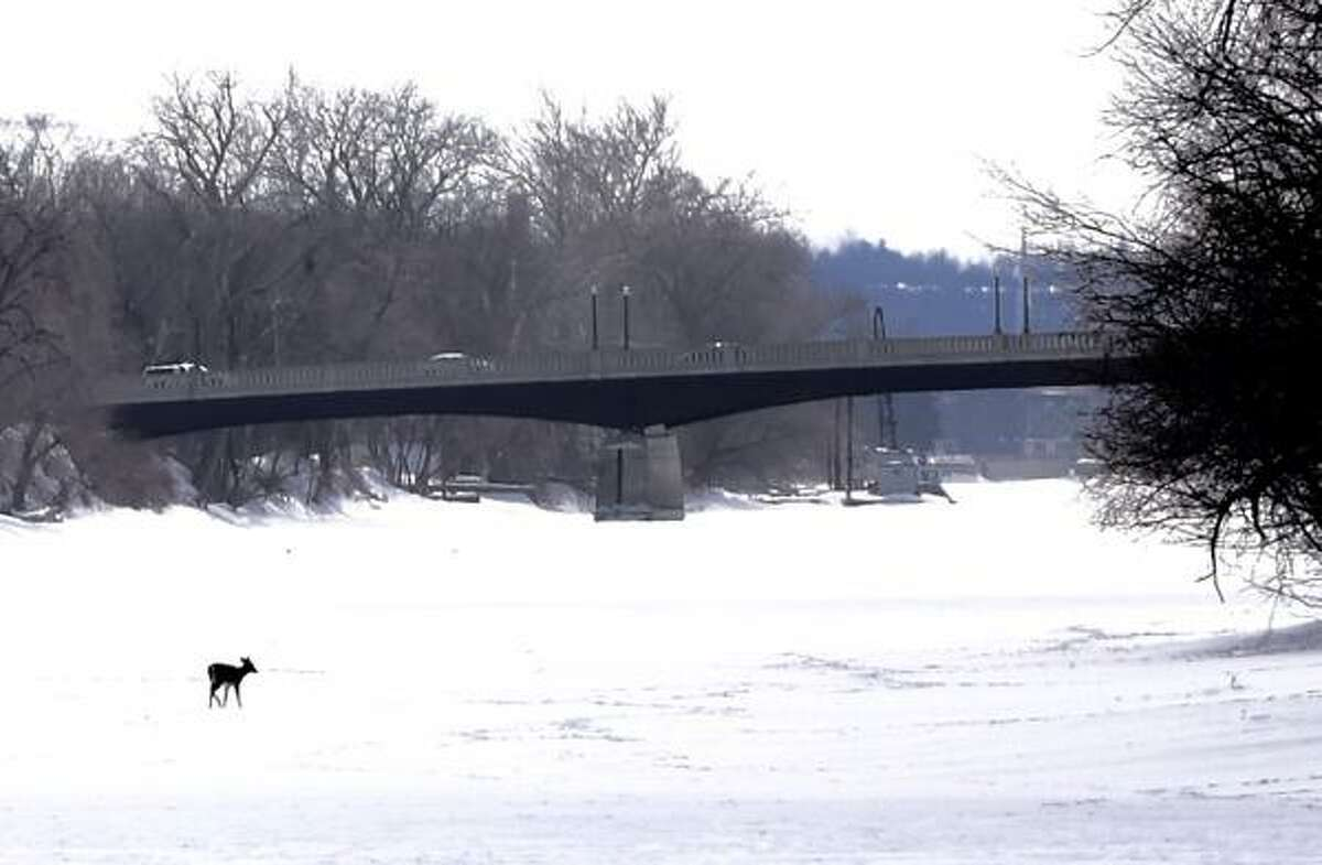 A deer walks across the Hudson River north of the 112th Street Bridge near Cohoes on Monday. (Skip Dickstein / Times Union)