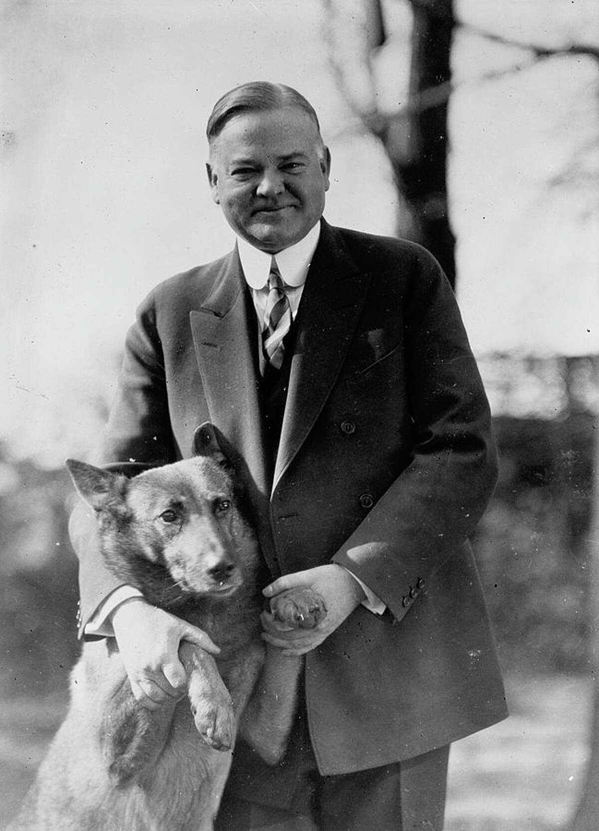 King Tut Tut, a Belgian shepherd, was one of nine dogs owned by Herbert Hoover's family. They also had two alligators.