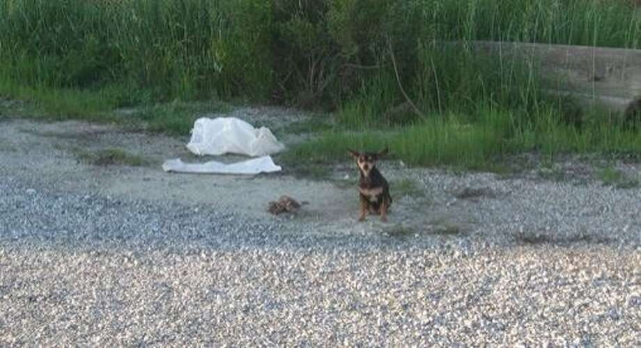 Investigators are looking for whoever is responsible for stuffing two dogs, a mother and her young puppy, into sandbags and throwing them froma  moving vehicle in Watsonville on Friday Feb. 20, 2015. Photo: Courtesy, Santa Cruz County Animal Shelter