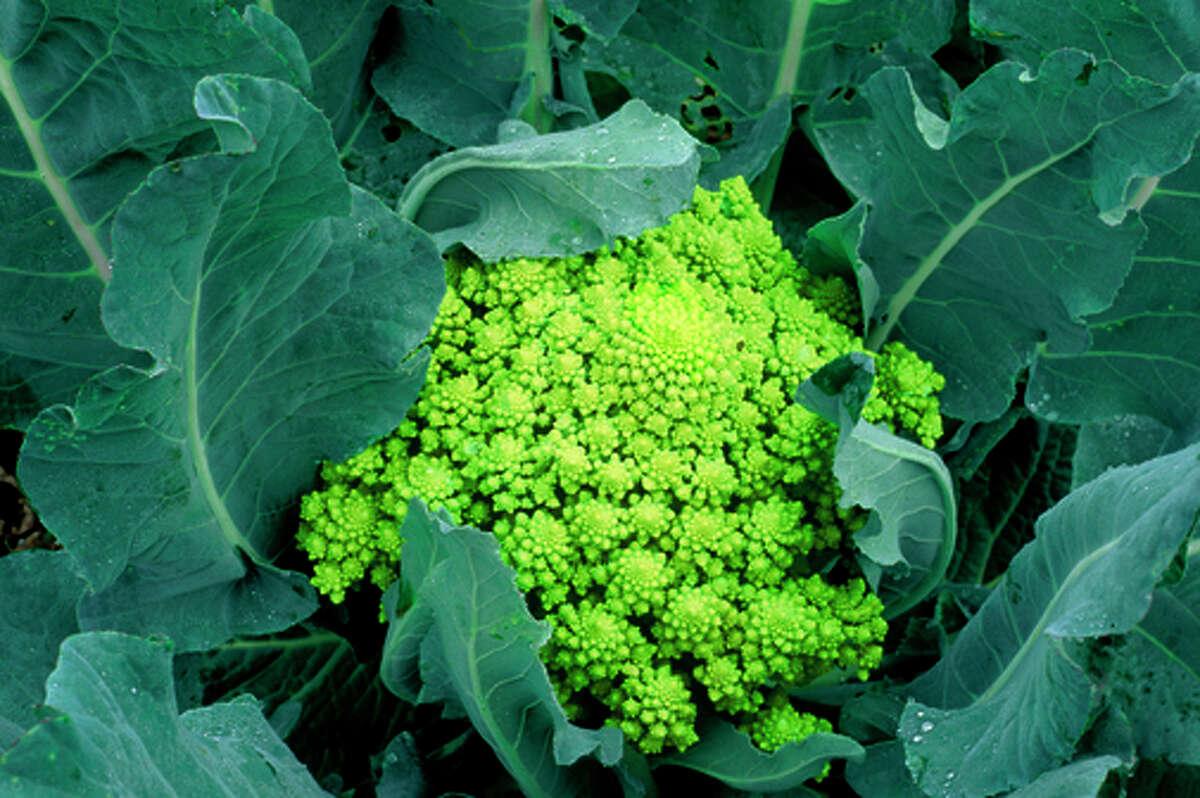 'Veronica' cauliflower is a romanesco type.