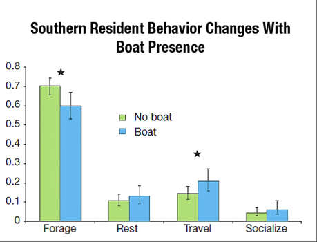 Impacts on behavior: Research we funded demonstrates that killer whales spend a greater proportion of time traveling and less time foraging in the presence of vessels, including kayaks. NOAA's caption for this graphic:  This figure shows the amount of time Southern Residents from J, K, and L pod spent foraging, resting, traveling, and socializing with and without the presence of boats in two areas near San Juan Island, Washington. When vessels were present, the whales foraged significantly less and travelled more. Photo: Data From Lusseau Et Al. 2009/NOAA