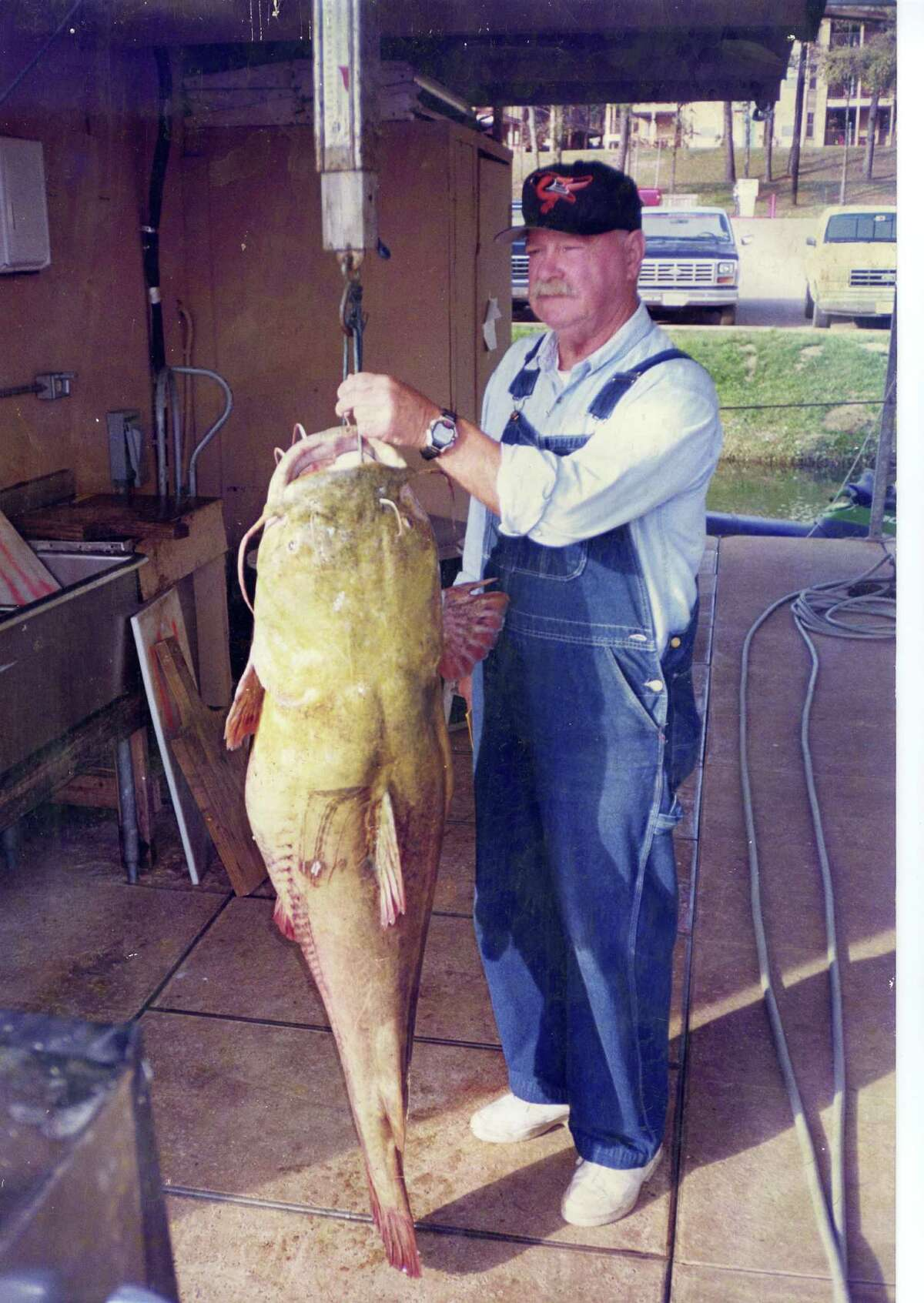 Texas record for freshwater, flathead catfish is 98.5 pounds, caught by James Laster at Lake Palestine December 2, 1998.