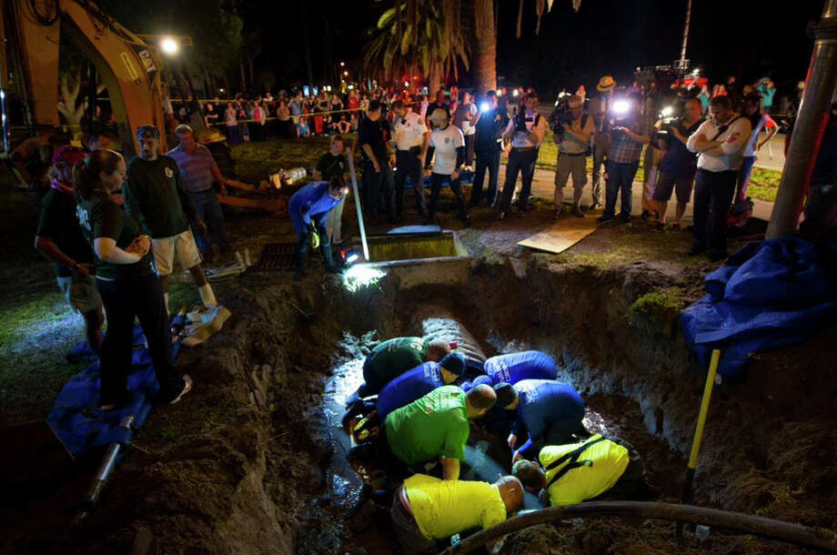 At least 19 manatees were freed from storm drains in Satellite Beach, Florida on Monday, February 23, 2015. Photo: SeaWorld