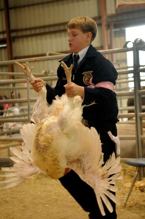 Samual Vassar, 14, a Memorial Middle School eighth-grader, holds his market turkey as he heads into the auction ring during the Spring Branch FFA Livestock Show and Sale on Feb. 7. Photo: Jerry Baker, Freelance