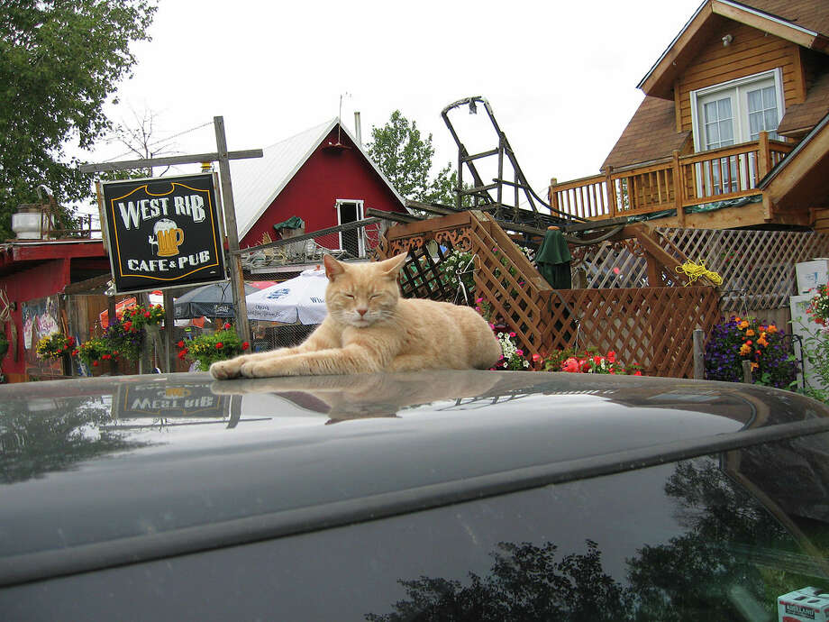 "Happiness fact #12: ""A cat has been the mayor of a town in Alaska for over 15 years. His name is Mr. Stubbs and every afternoon, he goes to a nearby restaurant and drinks water out of a wineglass laden with catnip.""
