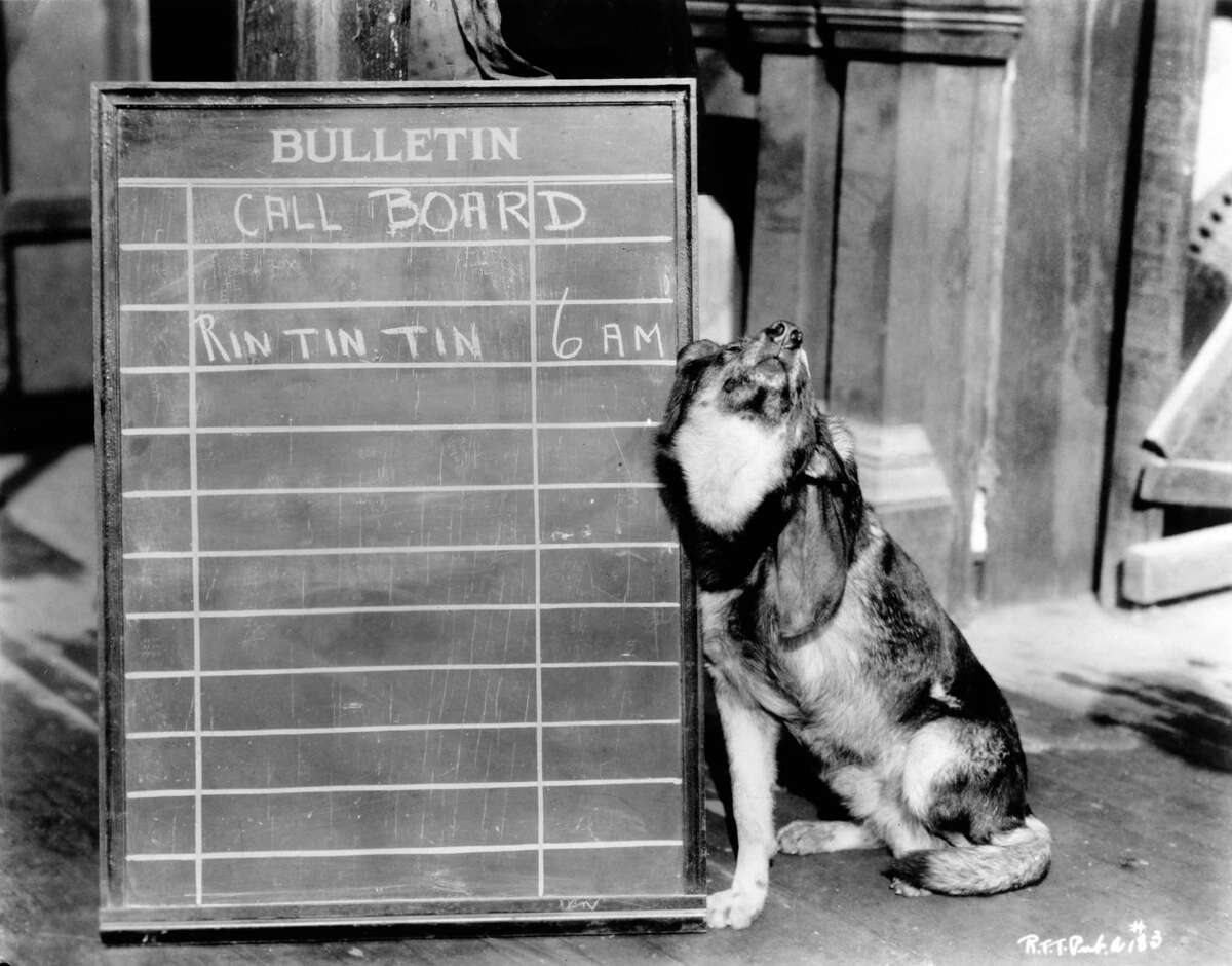 A 6am call is marked on a blackboard for canine film star Rin Tin Tin (right) at Warner Bros studios, Hollywood, California, circa 1925.