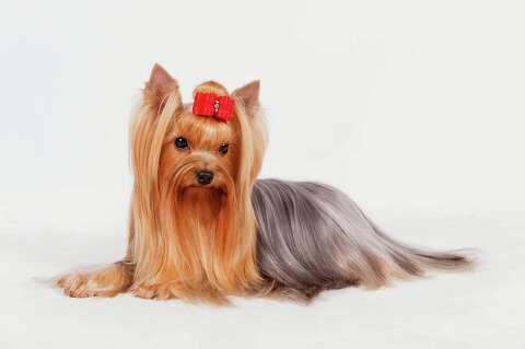 Wanna turn your dog into an Instagram star? Read this story