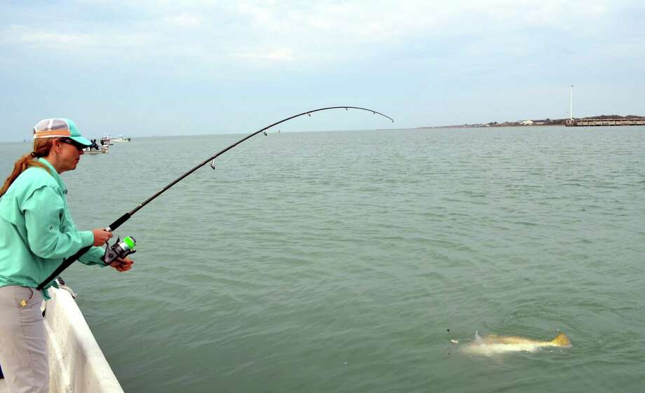 Shannon Sawyer of Goliad brings in a big black drum that the fourth grade science teacher fought to a standstill during a trip with Capt. Charlie Newton of Redfish Charters. Photo: Ralph Winingham /For The Express-News