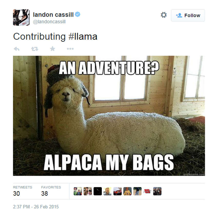 Twitter exploded with llama tweets as the Internet reacted two llamas evading capture during a televised chase for nearly an hour in Arizona on Thursday, Feb. 26, 2015.
