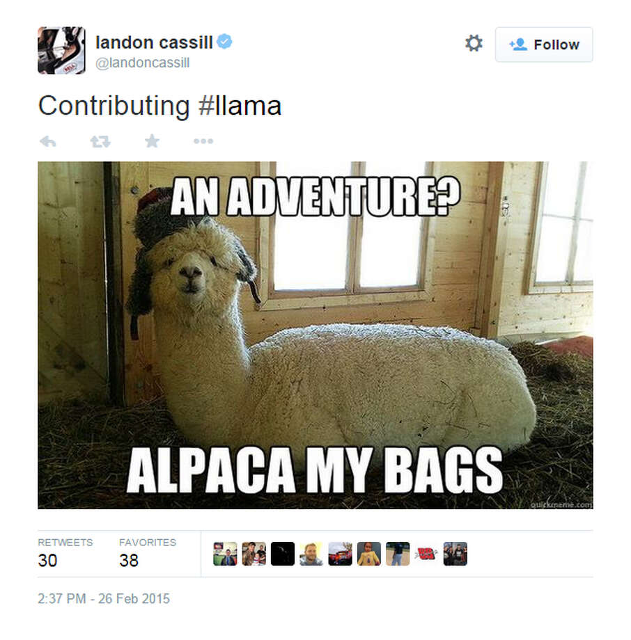 Twitter exploded with llama tweets as the Internet reacted two llamas evading capture during a televised chase for nearly an hour in Arizona on Thursday, Feb. 26, 2015. Photo: Screenshot From Twitter