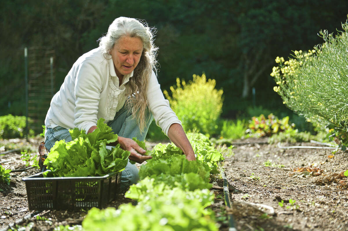Diane Dovholuk is incharge of the garden that supplies the Restaurant at Wente Vineyards.