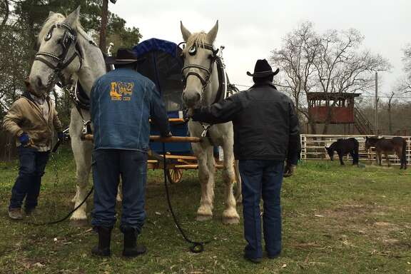 Getting the horses ready Friday.