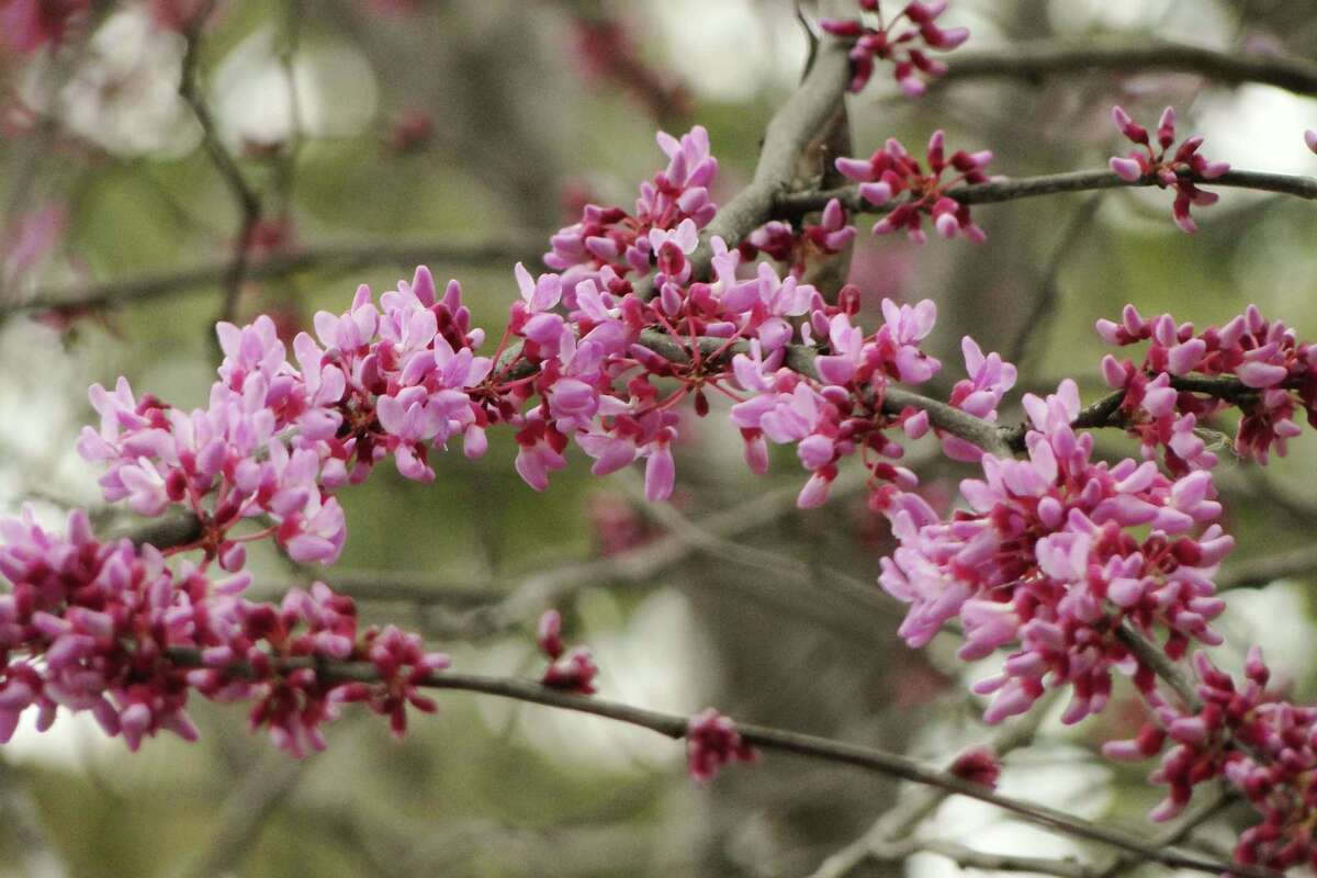 Signs Of Spring Are Blossoming In Small Trees Expressnews