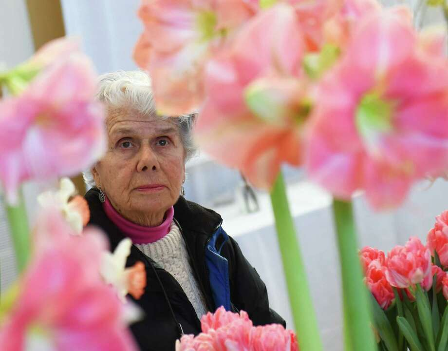 "Margaret Klumpp, of Old Greenwich, looks at colorful ""Rosalie"" flowers on display at the Hanami Preview of Spring flower show at Christ Church Greenwich in Greenwich, Conn. Friday, Feb. 27, 2015.  The show is presented by the Greenwich Green Fingers Garden Club in coordination with the Garden Club of America and features a display of floral and horticultural design, photography, botanical arts and education exhibits. Held every three years, the flower show attracts the best exhibitors and judges from across the country showcasing displays with an emphasis on aesthetic design, tranquility and nature's beauty.  Photo: Tyler Sizemore / Greenwich Time"