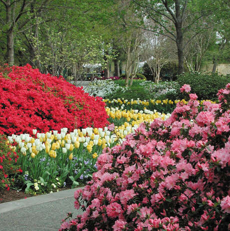 Spring brings a wealth of blooms along a Dallas Arboretum and Botanical Garden path. Photo: Courtesy Photo /Dallas Arboretum And Botanical Garden