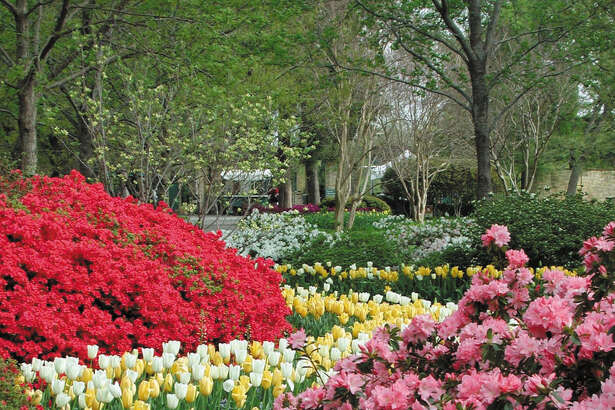 Spring brings a wealth of blooms along a Dallas Arboretum and Botanical Garden path.