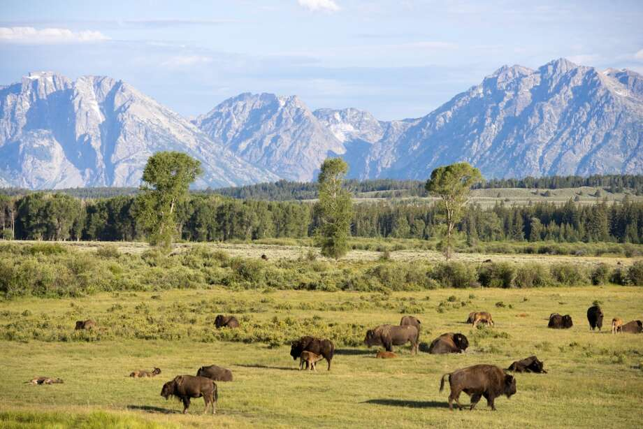 No. 9 - Grand Teton National Park Size: 309,993 Morning Visitors: 3.3 million annually Deaths: 59Common Causes of Death: Falls, Mountaineer Accidents Photo: Gail Shotlander, Getty Images / Flickr RF