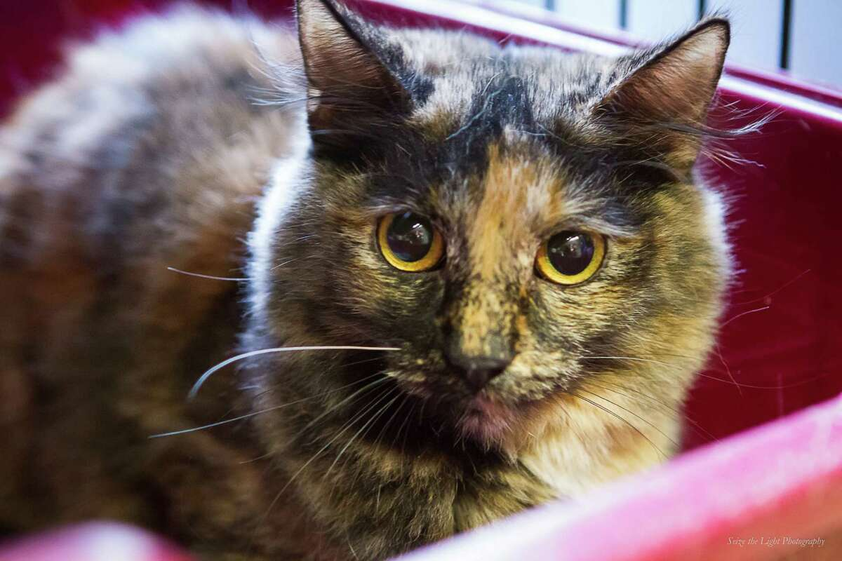 Cami is available for adoption from Bulverde Area Humane Society