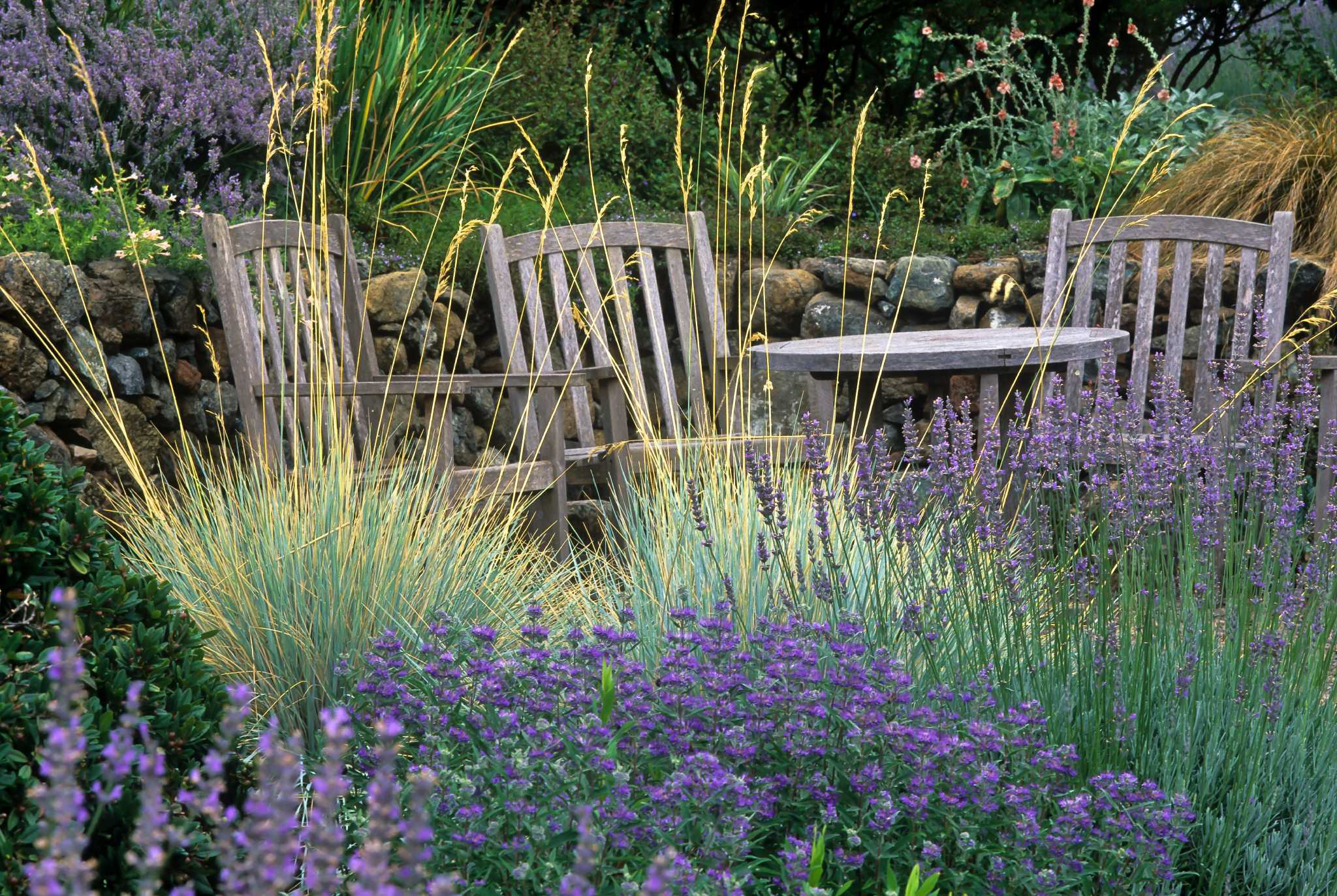 Ornamental grasses capture attention with easy beauty for Small blue ornamental grass
