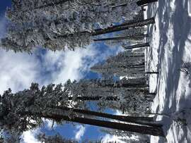 Slope Dope reader Jacquie Darveaux sent in this lovely shot of a snowy tree trail at Northstar. (Jacquie Darveaux)