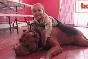 The Hulk, a 175-pound bully pit bull that made national headlines for simply being ginormous is getting his own reality show, his owner announced today. At 18 months old, The Hulk is the size of a mini horse and eats four pounds of beef each day.