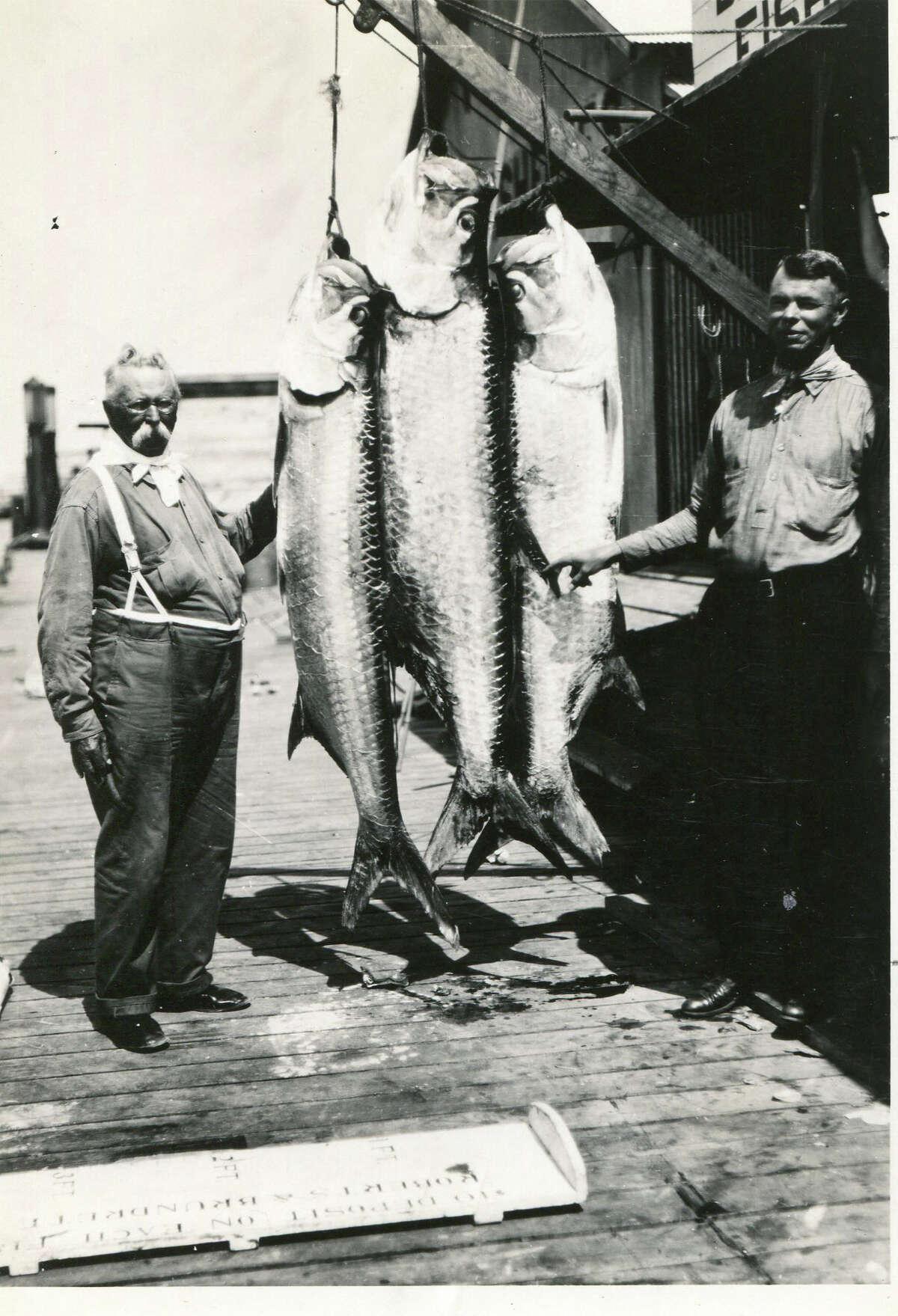 Tarpon, sailfish, mackerel, kingfish and more filled the docks throughout the year.