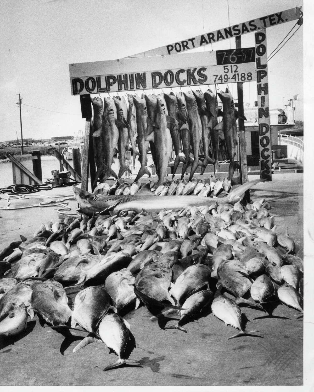 Twenty-three fisherman caught 206 fish most of them sharks, on this summer day in Port Aransas, 1987.
