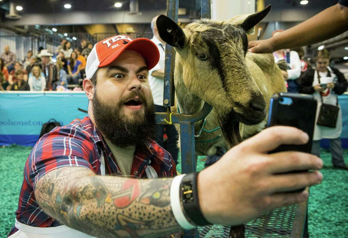 The Houston Chronicle's Criag Hlavaty takes a photo of himself and his goat as he gets ready to participate in the celebrity goat milking contest during the Houston Livestock Show and Rodeo at NRG Center on Tuesday, March 3, 2015, in Houston.
