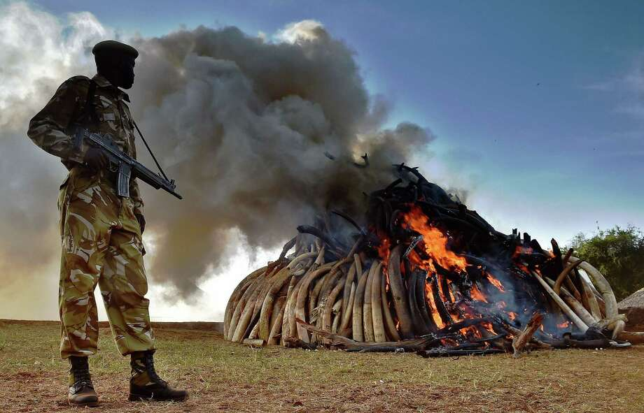 A Kenya Wildlife Services officer stands near a burning pile of elephant ivory. Photo: CARL DE SOUZA / AFP / Getty Images / AFP