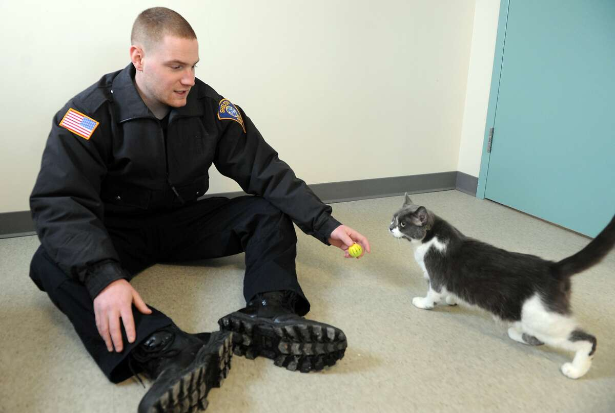 A GOOD GIRL NEEDS A HOME: Shelton (Conn.) Animal Control Officer Jason McLain plays with Cassidy, one of seven cats available for adoption at the city's new animal shelter.