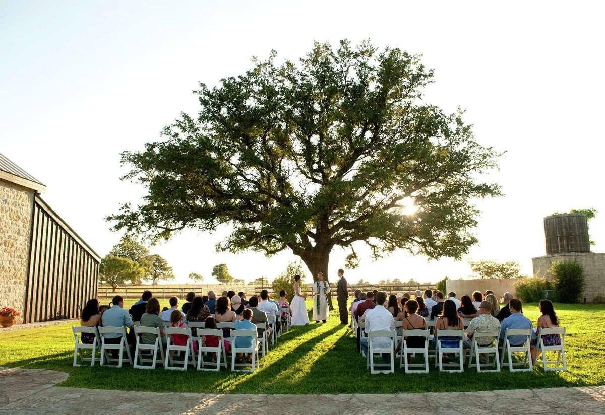 Becker Vineyards offers outdoor ceremonies under a magnificent oak tree.