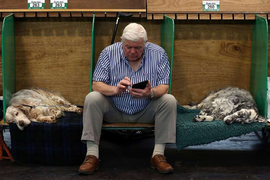 BIRMINGHAM, ENGLAND - MARCH 05: A man checks his phone between two resting dogs on the first day of Crufts dog show at the National Exhibition Centre on March 5, 2015 in Birmingham, England. First held in 1891, Crufts is said to be the largest show of its kind in the world, the annual four-day event, features thousands of dogs, with competitors travelling from countries across the globe to take part and vie for the coveted title of 'Best in Show'.  (Photo by Carl Court/Getty Images) Photo: Carl Court, Getty Images
