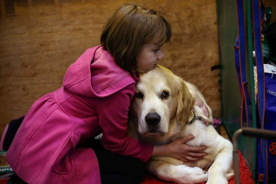 BIRMINGHAM, ENGLAND - MARCH 05: A girl hugs her dog on the first day of Crufts dog show at the National Exhibition Centre on March 5, 2015 in Birmingham, England. First held in 1891, Crufts is said to be the largest show of its kind in the world, the annual four-day event, features thousands of dogs, with competitors travelling from countries across the globe to take part and vie for the coveted title of 'Best in Show'.  (Photo by Carl Court/Getty Images) Photo: Carl Court, Getty Images