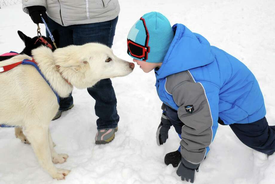 Saint Gregory's School first grade student Tadhg Swaine, right, thanks sled dog Pulli for the ride as students experienced an Iditarod style dog sled driven by musher Kate Walrath on Thursday, March 5, 2015, at Saint Gregory's School in Loudonville, N.Y. Saint Gregory's classes will follow the progress of this year's Iditarod race. The Kindergarten has prepared a map to help students track the race. The activities are design to help pupils learn about Alaska, and to experience how difficult the event is. (Michael P. Farrell/Times Union) Photo: Michael P. Farrell / 10030850A