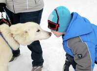 Saint Gregory's School first grade student Tadhg Swaine, right, thanks sled dog Pulli for the ride as students experienced an Iditarod style dog sled driven by musher Kate Walrath on Thursday March 5, 2015 in Loudonville, N.Y.  (Michael P. Farrell/Times Union)