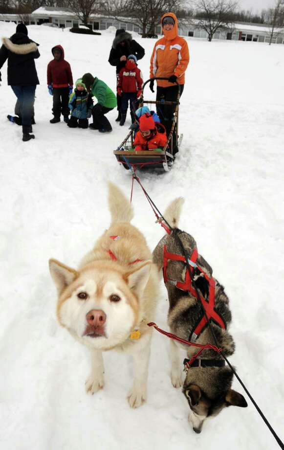 Saint Gregory's School first grade get a ride on a dog sled driven by musher Kate Walrath and pulled by sled dogs Lux, left, and Icarus, right, on Thursday March 5, 2015, at Saint Gregory's School in Loudonville, N.Y. Saint Gregory's classes will follow the progress of this year's Iditarod race. The Kindergarten has prepared a map to help students track the race. The activities are design to help pupils learn about Alaska, and to experience how difficult the event is. Walrath runs a pet service called Run By Dogs, which offers sled dog excursions and educational programs. (Michael P. Farrell/Times Union) Photo: Michael P. Farrell / 10030850A