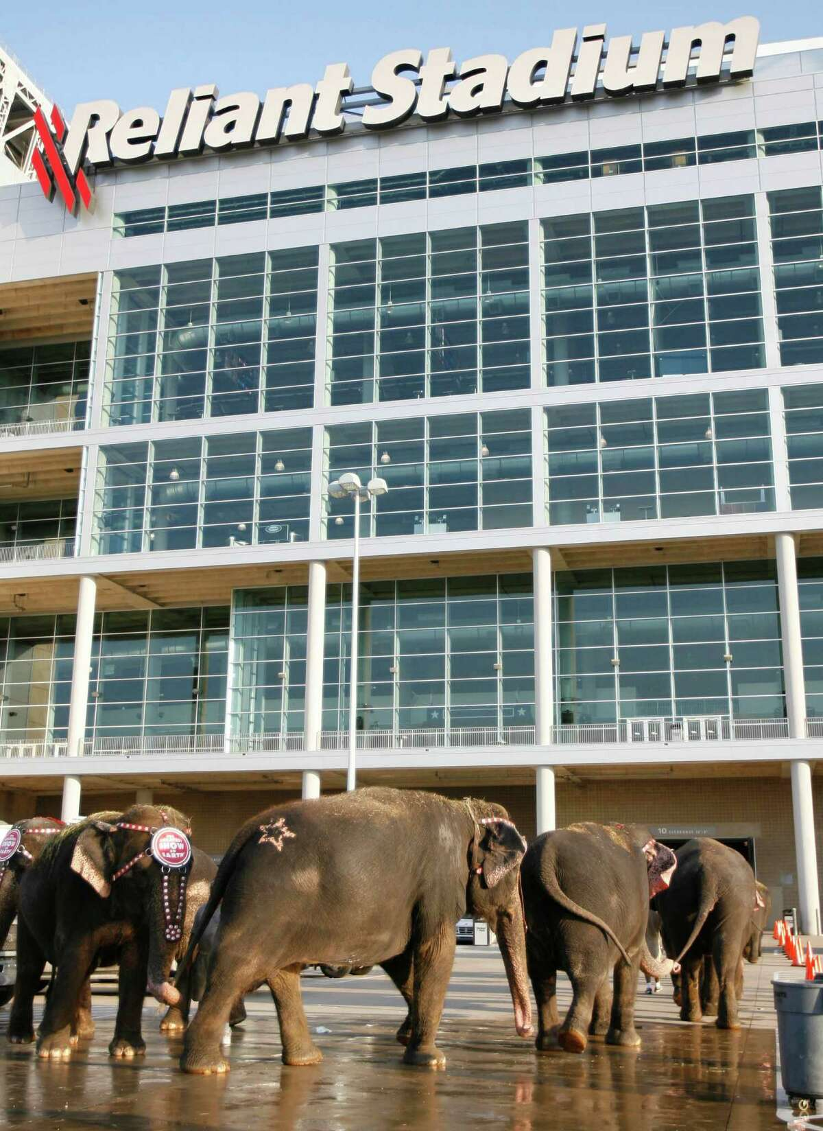Ten female Asian elephants walk into Reliant Stadium in 2006 for the circus's Houston visit.