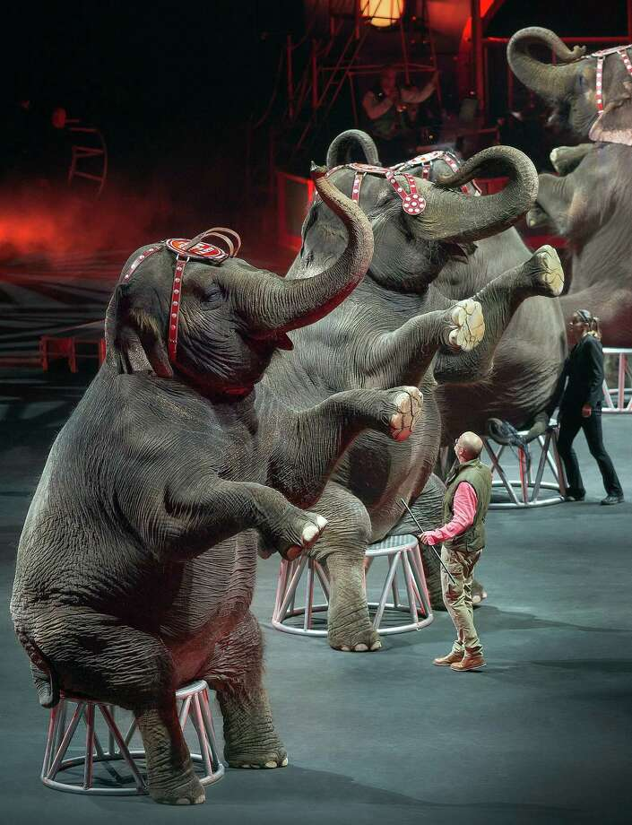 In this Jan. 3, 2015 photo provided by Feld Entertainment Inc., elephants perform at the Ringling Bros. and Barnum & Bailey Circus, at the Amalie Arena in Tampa, Florida. The Ringling Bros. and Barnum & Bailey Circus said it will phase out its iconic elephant acts by 2018. Photo: Gary Bogdon /Associated Press / Feld Entertainment