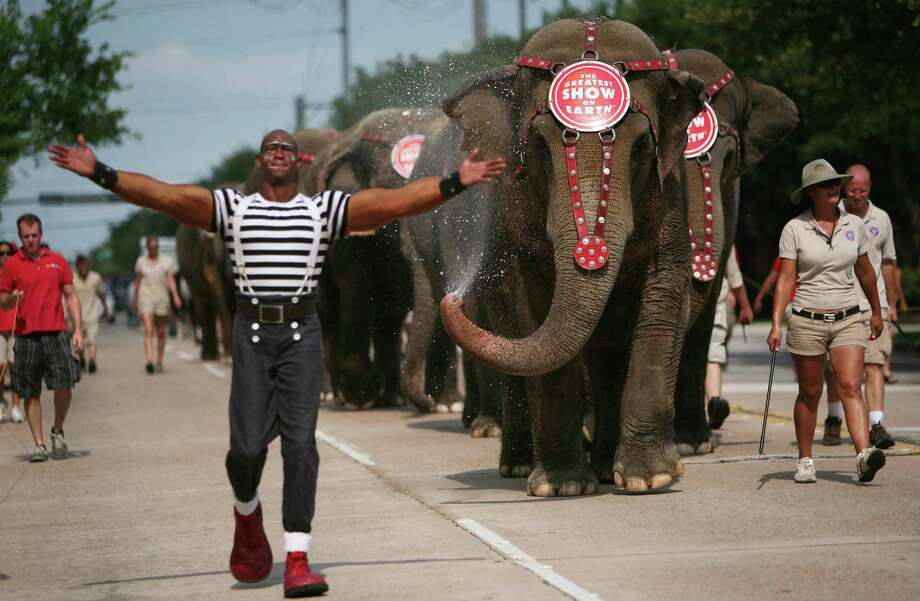 The Asian Elephants cool themselves off as they make their way to Reliant Stadium from the Union Pacific Train tracks during The Ringling Bros. Animal Walk on Monday, July 5, 2010, in Houston.  ( Mayra Beltran / Chronicle ) Photo: Mayra Beltran, HC Staff / Houston Chronicle