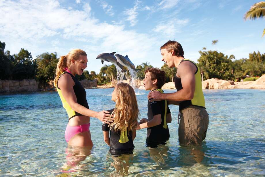 Starting March 23, access to Dolphin Cove and the park's sharks and coral reef attractions will remain closed until construction crews complete the project in May 2016, according to a news release. Photo: SeaWorld San Antonio,  Courtesy