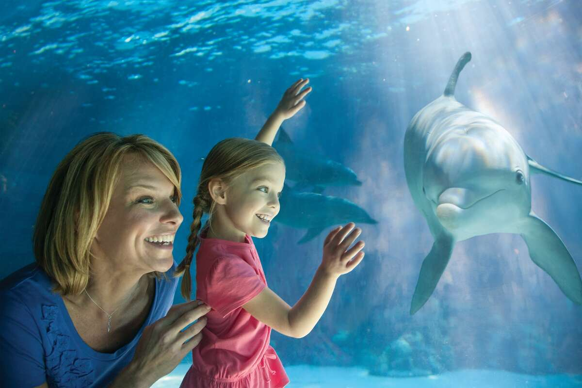 Starting March 23, access to Dolphin Cove and the park's sharks and coral reef attractions will remain closed until construction crews complete the project in May 2016, according to a news release.