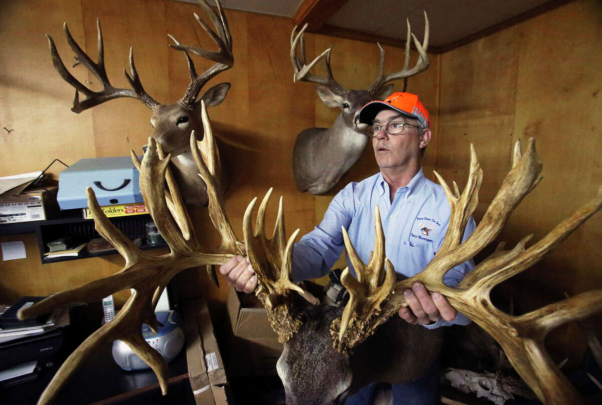 """Gery Moczygemba holds the prize rack of Paco Free Roller in the """"Paco Room"""" as he shows his deer breeding operation in Karnes County on February 14, 2015. Racks from the original Paco are hung on the wall."""
